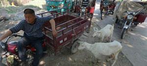 奶山羊调拨站门口拉羊的农户们