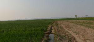 麦田旁的灌溉小水渠